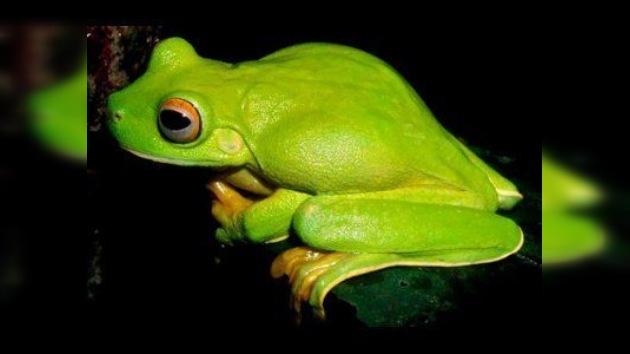 Más de un millar  de especies desconocidas fueron descubiertas en Nueva Guinea