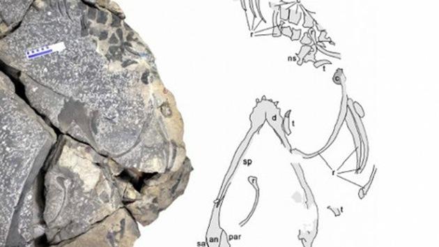 Fósiles de dragón marino demuestran que hay vida después de una gran extinción
