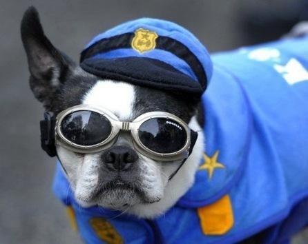 En Nueva York hasta los perros celebran Halloween