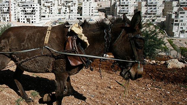 Los burros-terrorista, nueva táctica de Hamás