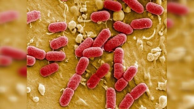 Ya son 50 las víctimas mortales de la bacteria 'E.coli'