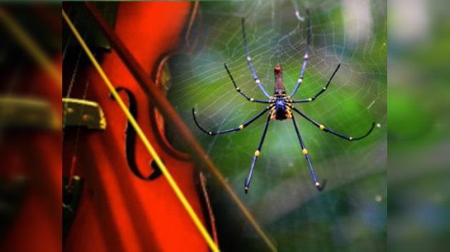 Cuerdas de violín, 'tejidas' con telarañas