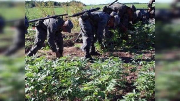 Incautaron más de 7 toneladas de marihuana en México