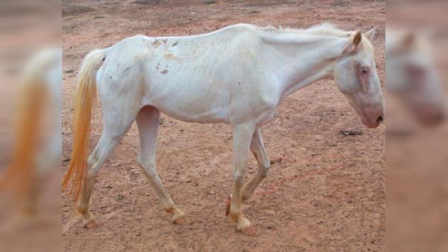 Texas: los 'cowboys' se bajan del caballo
