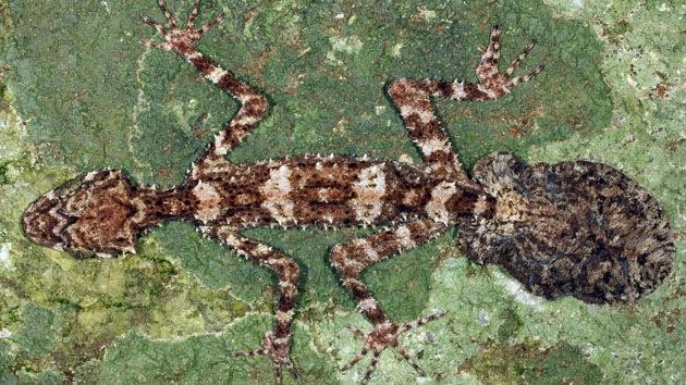 Mundo perdido: descubren tres nuevas especies de animales en Australia