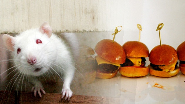 Estudio: La dieta basada en la comida basura provoca cansancio y sedentarismo