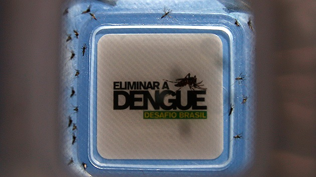 Brasil libera miles de mosquitos 'buenos' para combatir el dengue