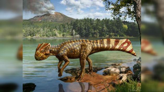 Fue descubierto un nuevo tipo de dinosaurio