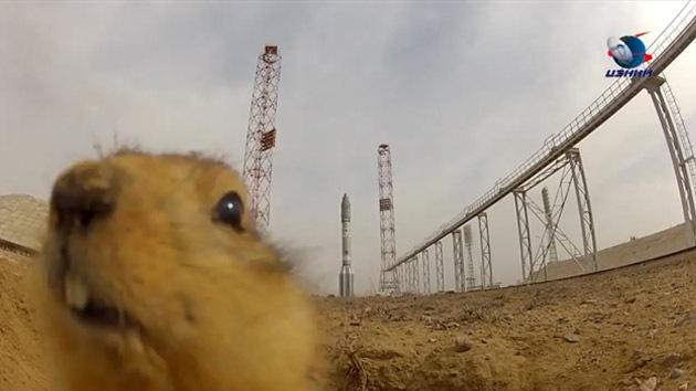 VIDEO: El cosmódromo mira al cielo... y al roedor bajo tierra