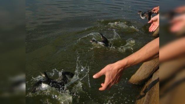 Miles de aves se precipitan contra el pavimento en Utah