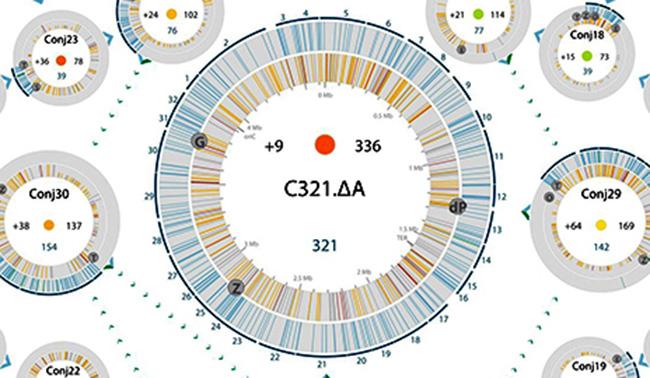 La recodificación de un genoma entero abre nuevas vías para tratar enfermedades