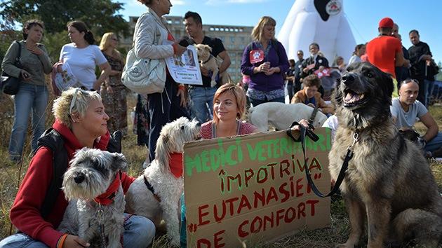 Fotos: Protestas en Rumanía por la autorización de matar a los perros callejeros