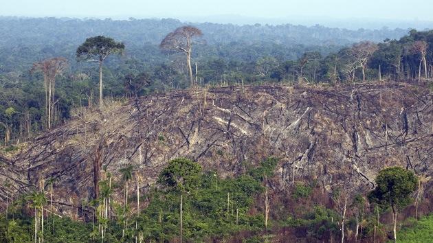 Brasil hará un inventario de todos sus árboles en la Amazonía