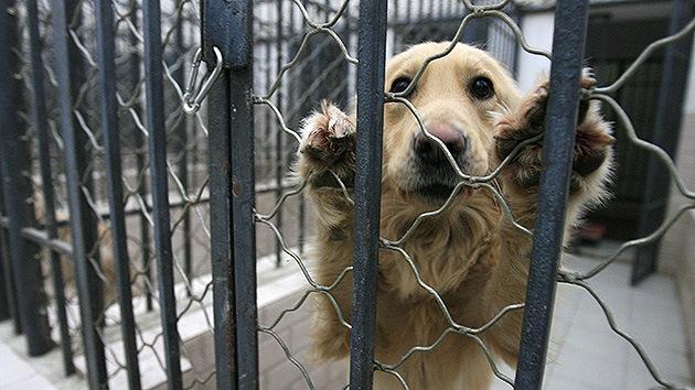 Cae una red china que comerciaba con carne de perro y gato