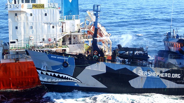 """EE.UU. califica de """"piratería"""" la lucha de Sea Shepherd contra los balleneros"""