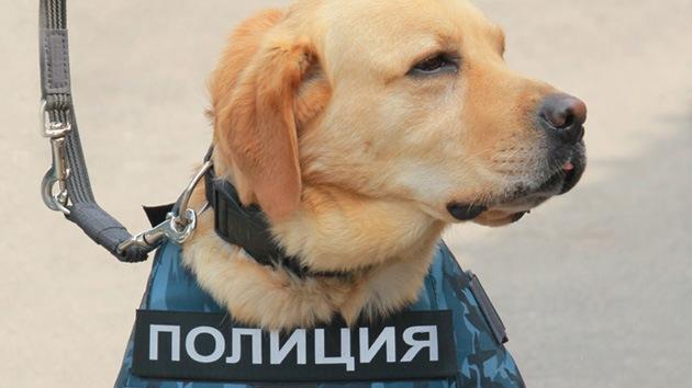 La Policía desmiente haber encontrado una bomba cerca del aeropuerto de Domodédovo de Moscú