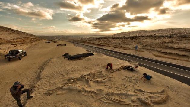 Aclaran el misterio de un cementerio prehistórico de ballenas en Chile