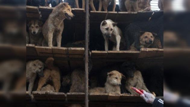 Cancelan un festival gastronómico chino de recetas de carne canina