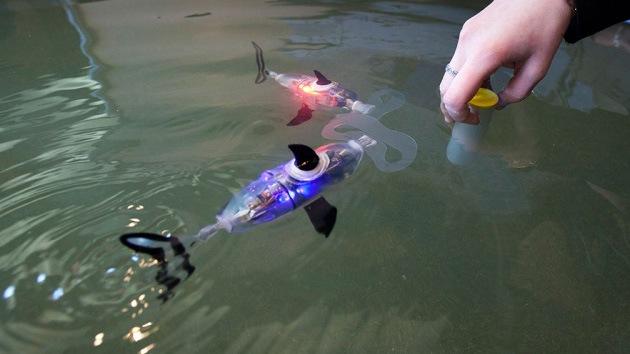 Científicos rusos desarrollan un pez robótico con fines militares