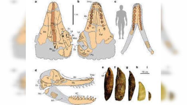 El 'leviatán' que se escondía en el desierto de Perú