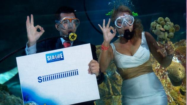 FOTOS: Una pareja se casa bajo el agua rodeada de tiburones