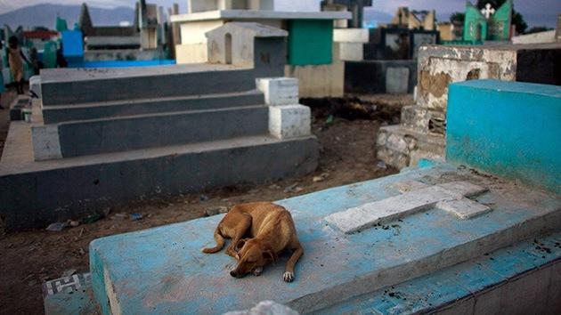 Trágica muerte de un perro argentino que pasó 9 años junto a la tumba de su dueño
