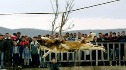 YO ESTOY CONTRA EL MALTRATO ANIMAL - Página 2 3c696056e50a6185309884d5c9b443f4_article430bw