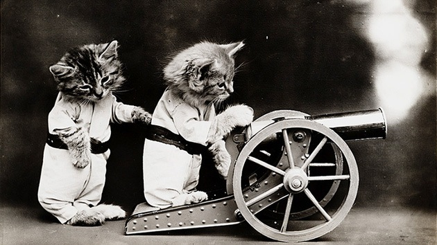 Adorable album centenario de gatos con ropa