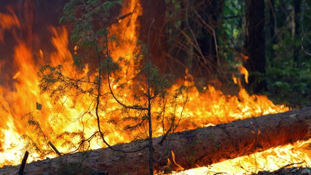 FOTOS, VIDEO: 33 incendios simultáneos devoran los bosques de Siberia