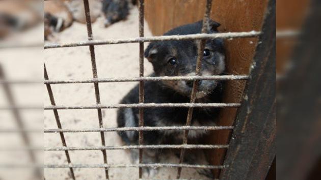 El Gobierno y la sociedad de Rusia dicen NO al maltrato animal