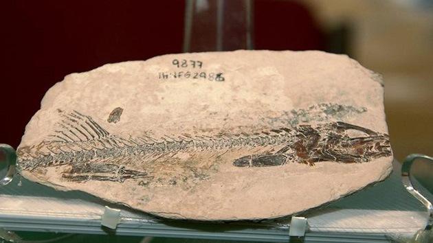 Hallan en México fósil de un pez que vivió hace 90 millones de años