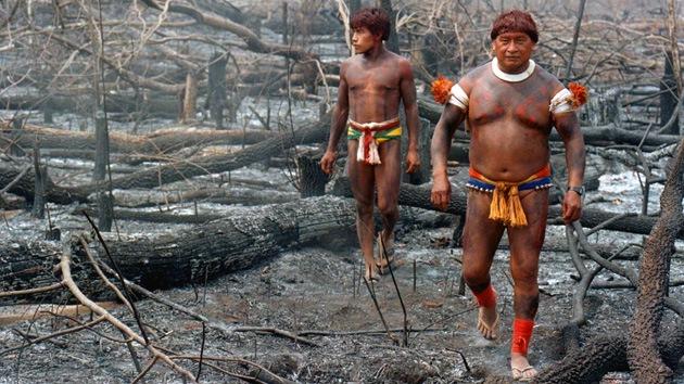 Los incendios forestales convertirán al 'pulmón del planeta' en un desierto estéril