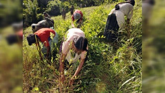 Bolivia 'rumia' si salirse del tratado antidroga de la ONU que penaliza el mascado de coca