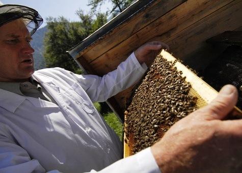 Una jornada de miel se festeja en Rusia