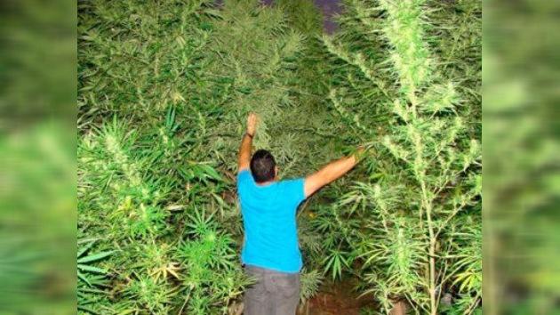 Un pueblo español dice 'sí' a plantar marihuana