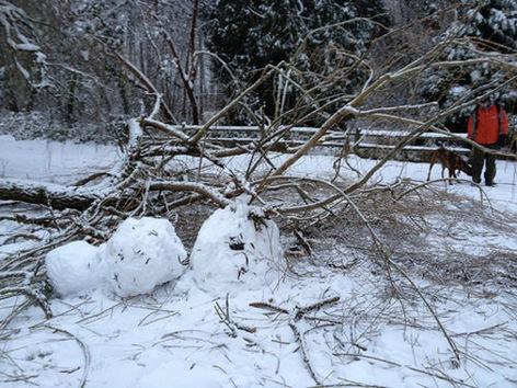 Una tormenta de nieve provoca apagones y causa caos en EE. UU.