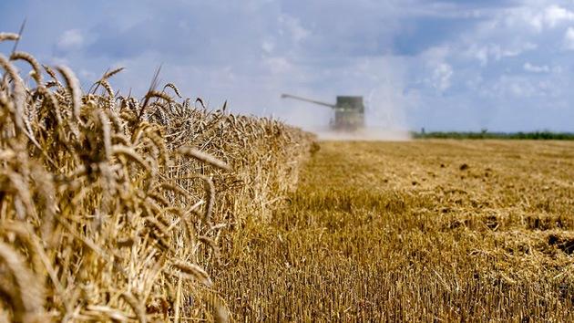 Monsanto compensa a agricultores por haber contaminado su trigo