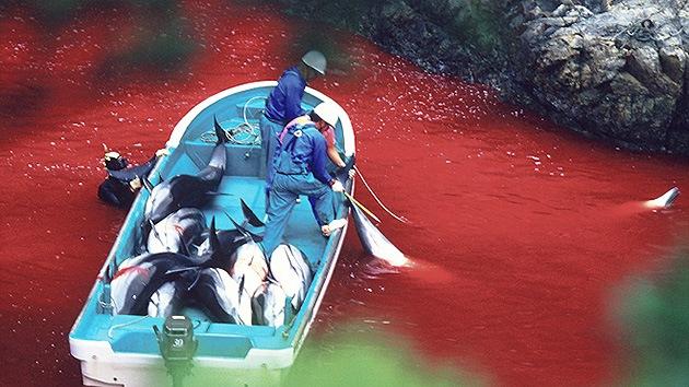 Fotos: Un pueblo japonés famoso por su masacre de delfines abrirá un parque marino