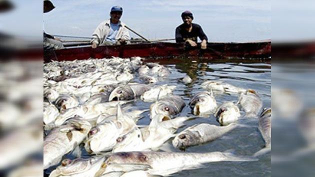 El volcán Taal en Filipinas causa la muerte de 700 toneladas de peces