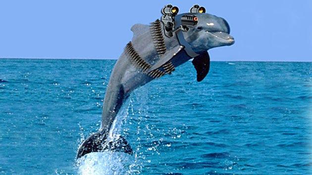 Delfines armados huyen de su base en el mar Negro persiguiendo a una hembra