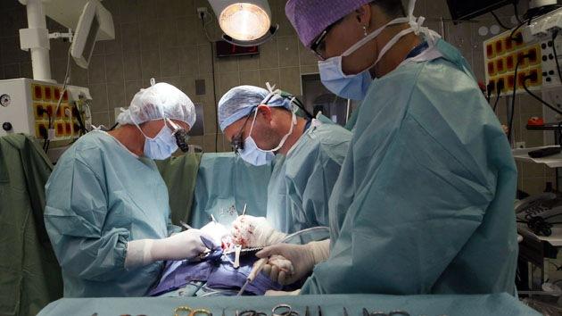 Animales podrían convertirse en donantes de órganos destinados a humanos