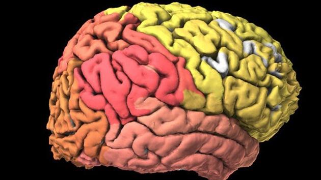 Crean el primer atlas interactivo del cerebro