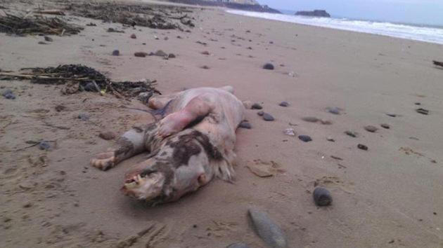 Hallado el cadáver de una extraña criatura en las costas de EE.UU