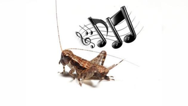 La música  jurásica o cómo cantaban los grillos prehistóricos