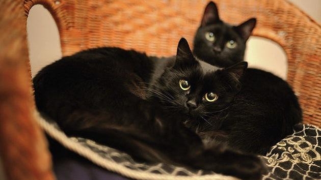 Gato encerrado: arrestan a un italiano por comer felinos