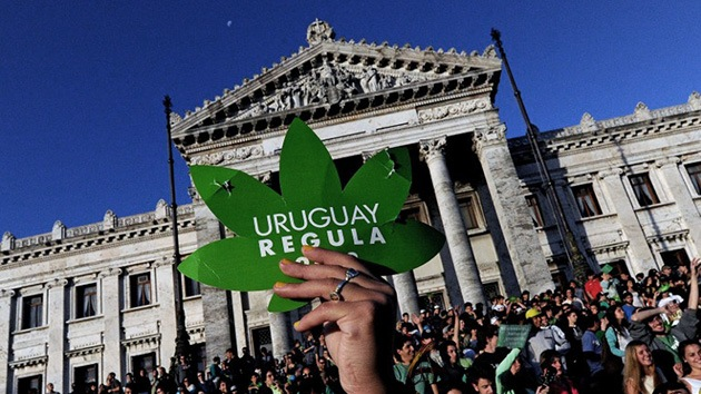 Arrancan cursos para cultivar marihuana en Uruguay