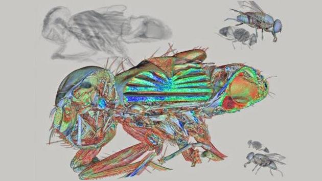 Las entrañas de una mosca, premio a la mejor imagen