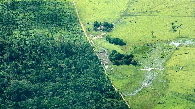 Los narcotraficantes asestan un golpe mortal a los bosques de Centroamérica