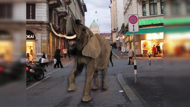 Elefante paseó por centro de negocios suizo