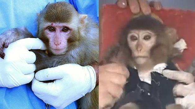 el regreso exitoso del mono que Irán envió al espacio